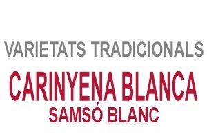 Carinyena Blanca / Samsó Blanc