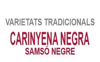 Carinyena Negra / Samsó Negre