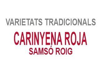 Carinyena Roja / Samsó Roig