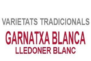 Garnatxa Blanca