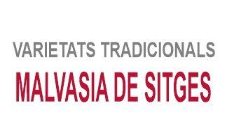 Malvasia de Sitges
