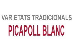 Picapoll Blanc